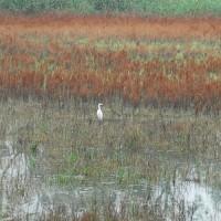 Kühkopf Herbst -Ein einsamer Jäger-