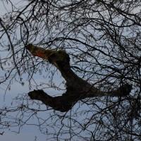 Ungeheuer im Pfungstädter Moor